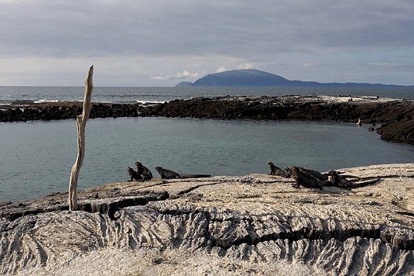 Isla Fernandina